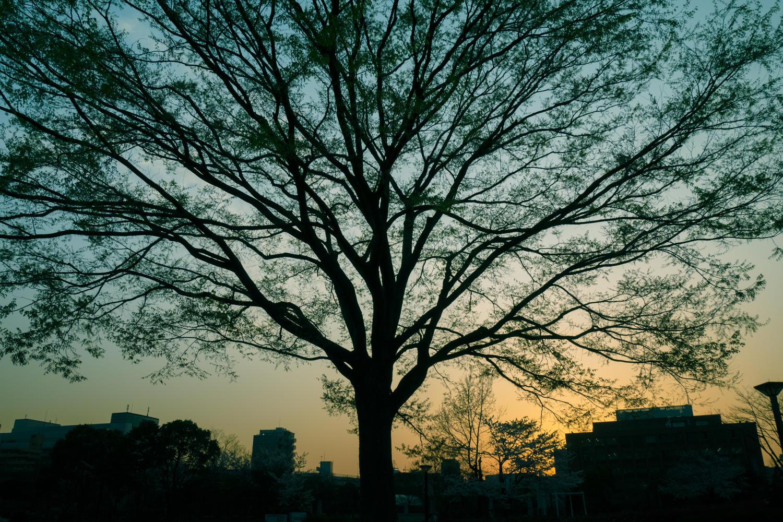 公認会計士試験合格までの道のり9 〜5月短答〜