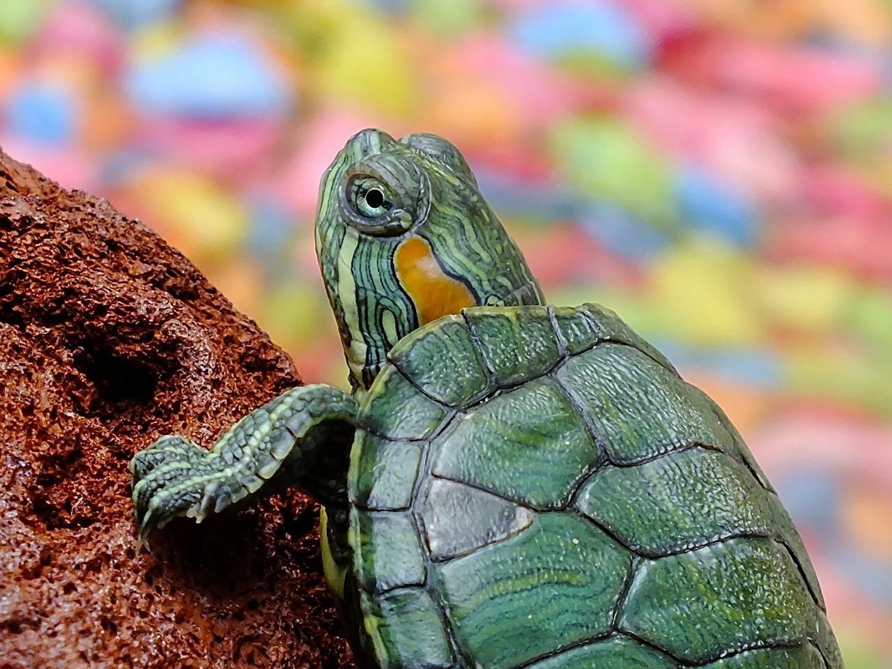 turtle-182121_1280